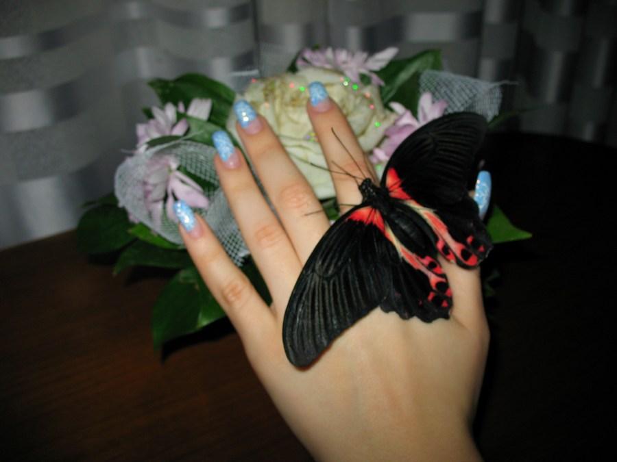 Купить недорого живых бабочек